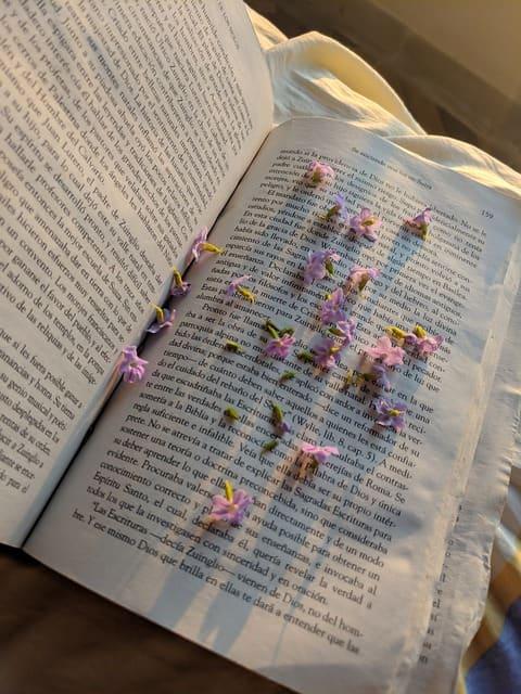 naturalismo literario